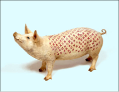 Pig Louis Vuitton