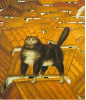 Cat On A Roof 1978